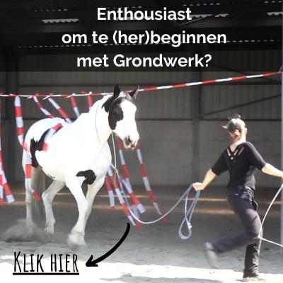 starten-met-grondwerk-met-je-paard