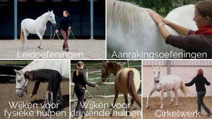 de-5-basisoefeningen-grondwerk-met-paarden