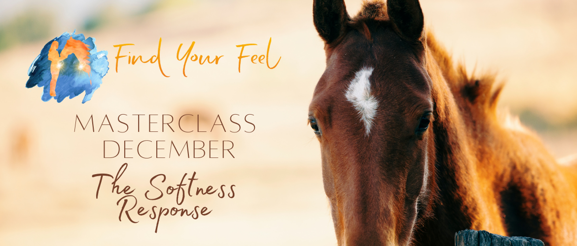 Find Your Feel Masterclass van December: The Softness Response