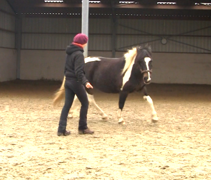Los Cirkelen Horsefulness Lila