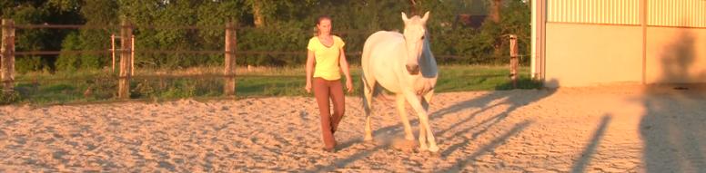paarden trainen los cirkelen