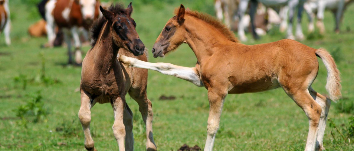 Less nice character traits of your horse: accept or change them?