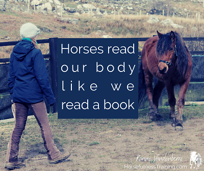 horses-read-our-body-like-we-read-book