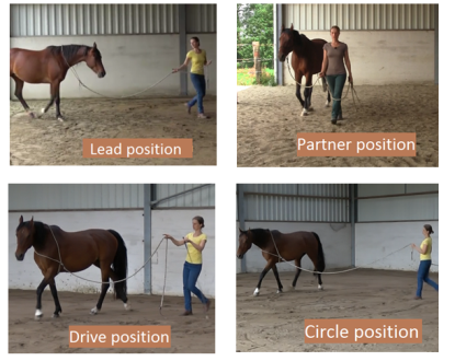 leading-your-horse-groundwork