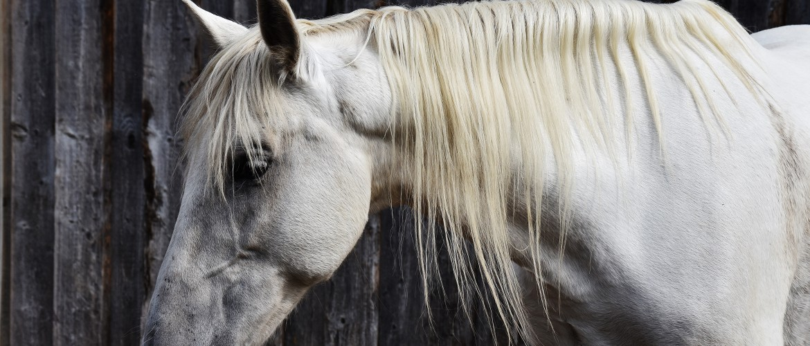 Are you catching the subtle signals your horse is giving you?