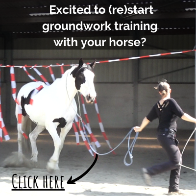 start-groundwork-with-my-horse