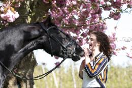 De oplossing voor jouw probleem paard