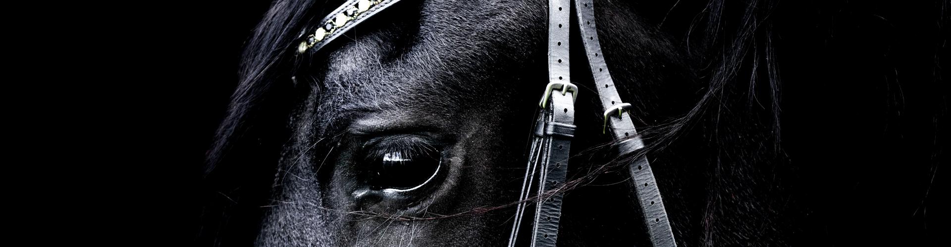 Horse Health Plan voorkom dierenartskosten
