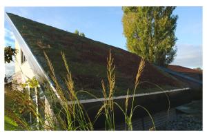 interview met Tuinman Lodewijk over groene daken