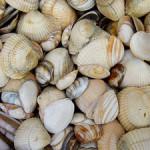 kruipruimte-isoleren-met-schelpen
