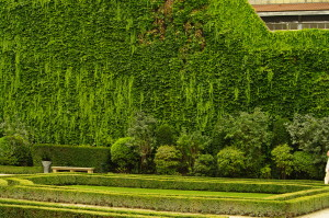 Interview met RTL 4 tuinman over verticale tuinen