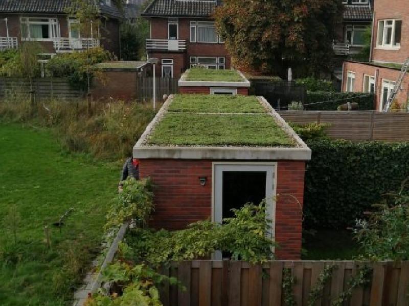 voorbeeld van groendak of sedumdak op carport, schuur, overkapping en tuinhuis