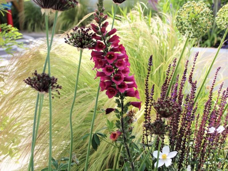 beplanting en graszoden tuinaanleg