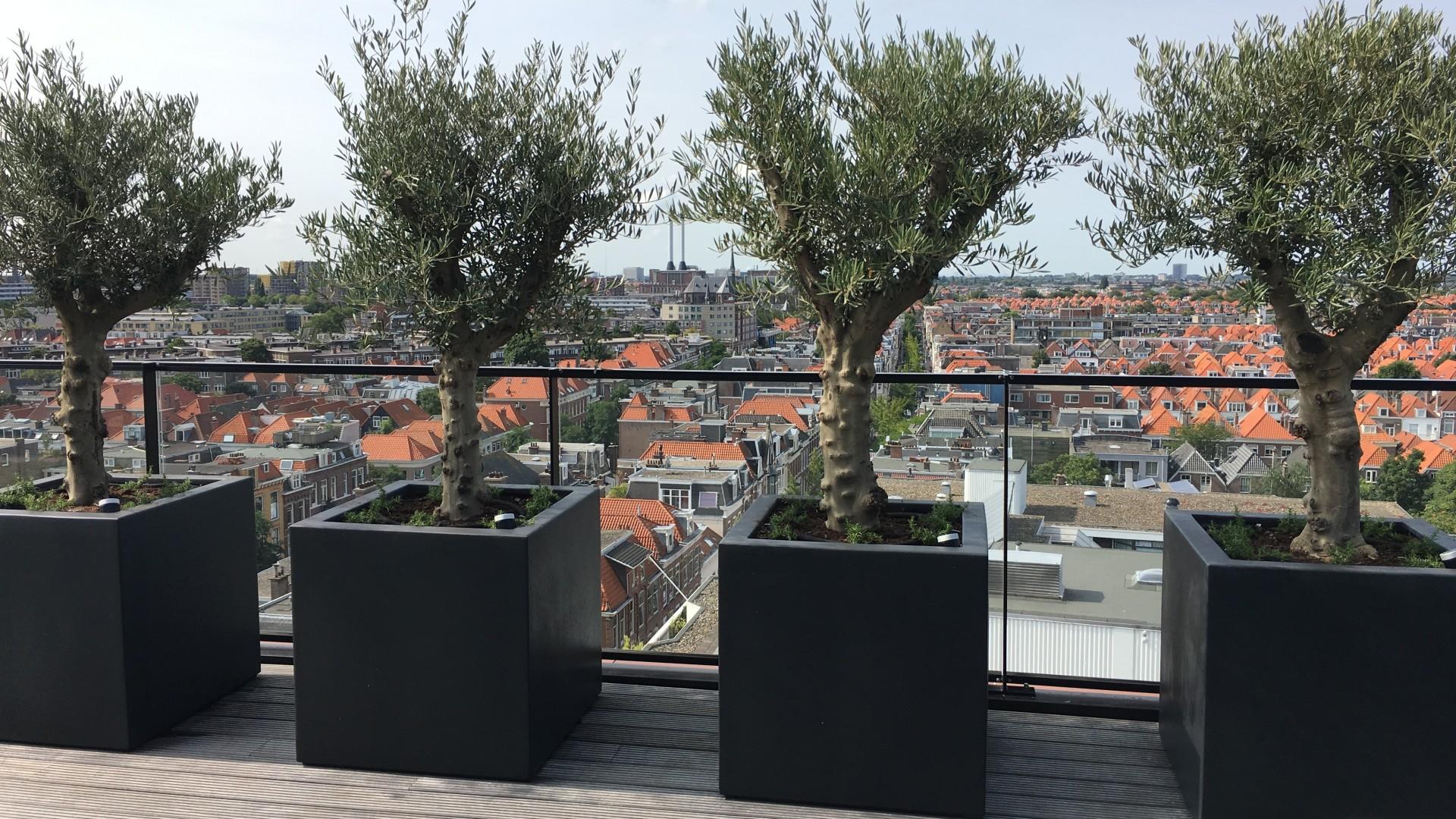 aanleg en ontwerp dakterrassen en daktuinen