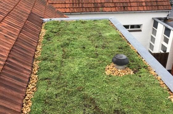 aanleg daktuin rotterdam