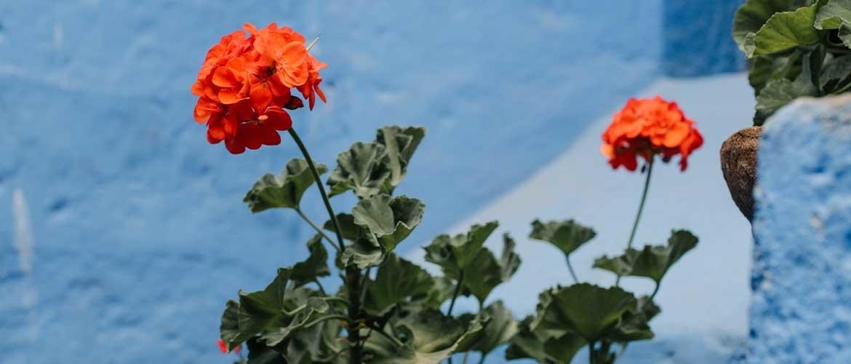 Pas complementair contrast toe in uw tuin