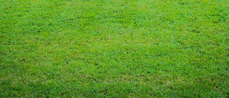Geel/ bruine vlekken gazon: hoe bestrijd en voorkom je emelten?
