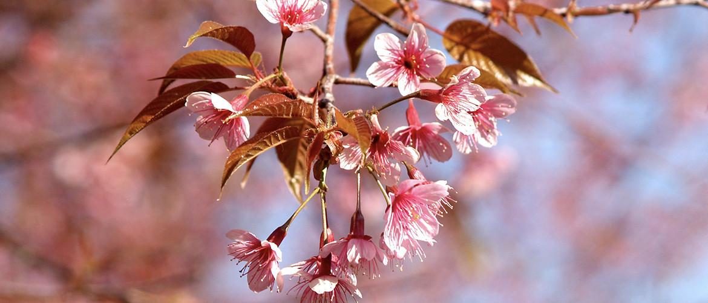 Tips voor een fleurige tuin in de herfst
