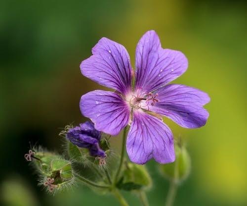 beplanting fleurige tuin herfst