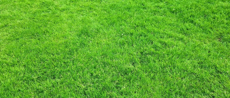 Wanneer moet ik gras zaaien?