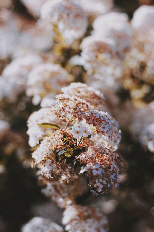 fleurige tuin herfst