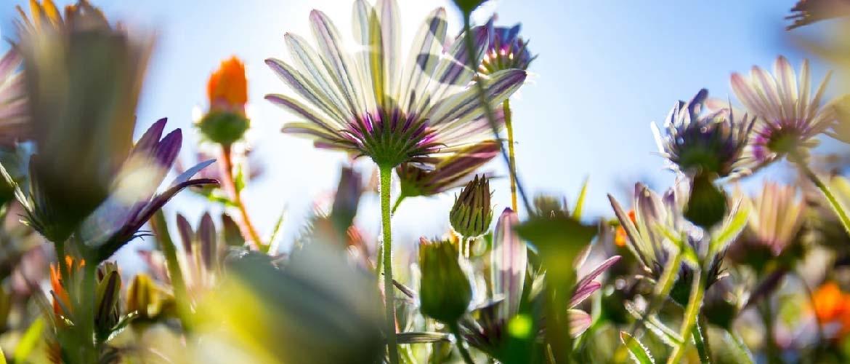 Welke struiken en planten kunt u plaatsen in de volle zon?