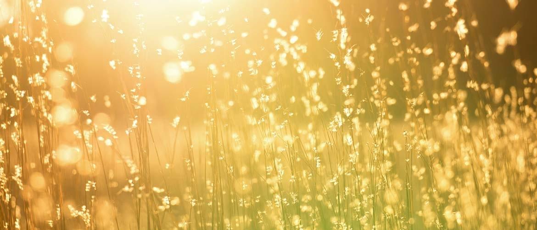 Hoe kunt u de zon in uw tuin berekenen?