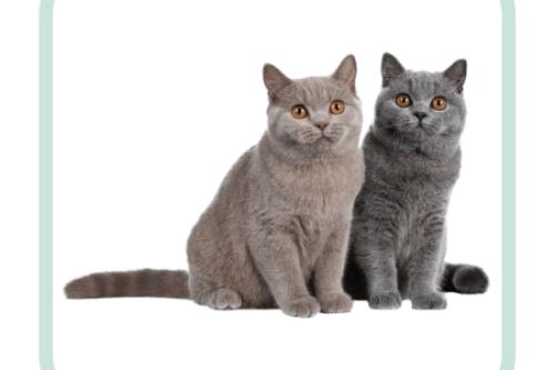 gedragsconsult-kat