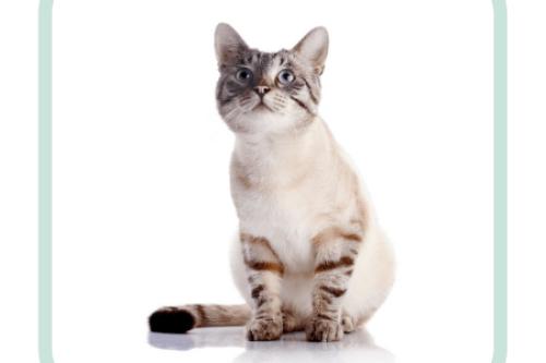 gedragstherapie-kat-compleet-consult