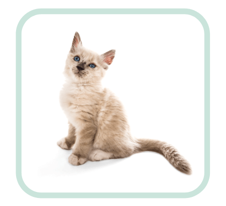 gedragstherapie-kat-email-consult