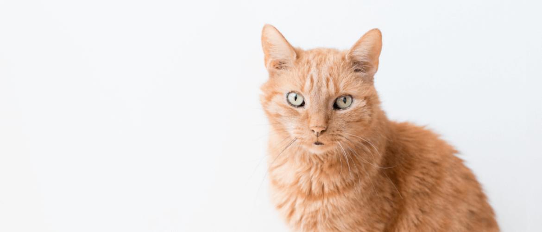 Oudere katten: welke kwaaltjes ga je tegenkomen?