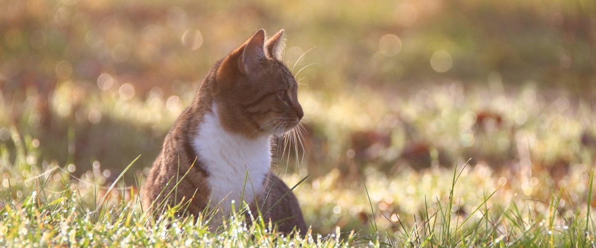 Tips voor een blije lente met je kat!