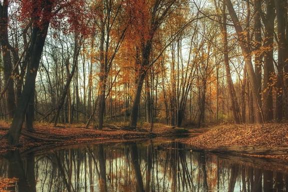 bos herfst natuur