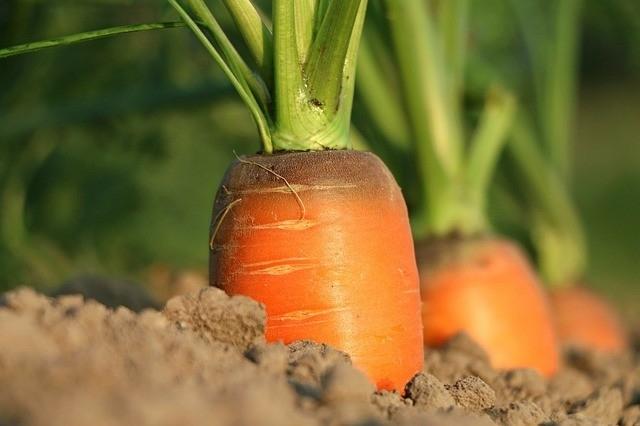 gezond gelukkig landbouw