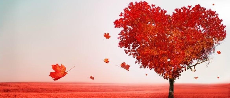 Het verschil tussen verliefdheid en een liefdesverslaving