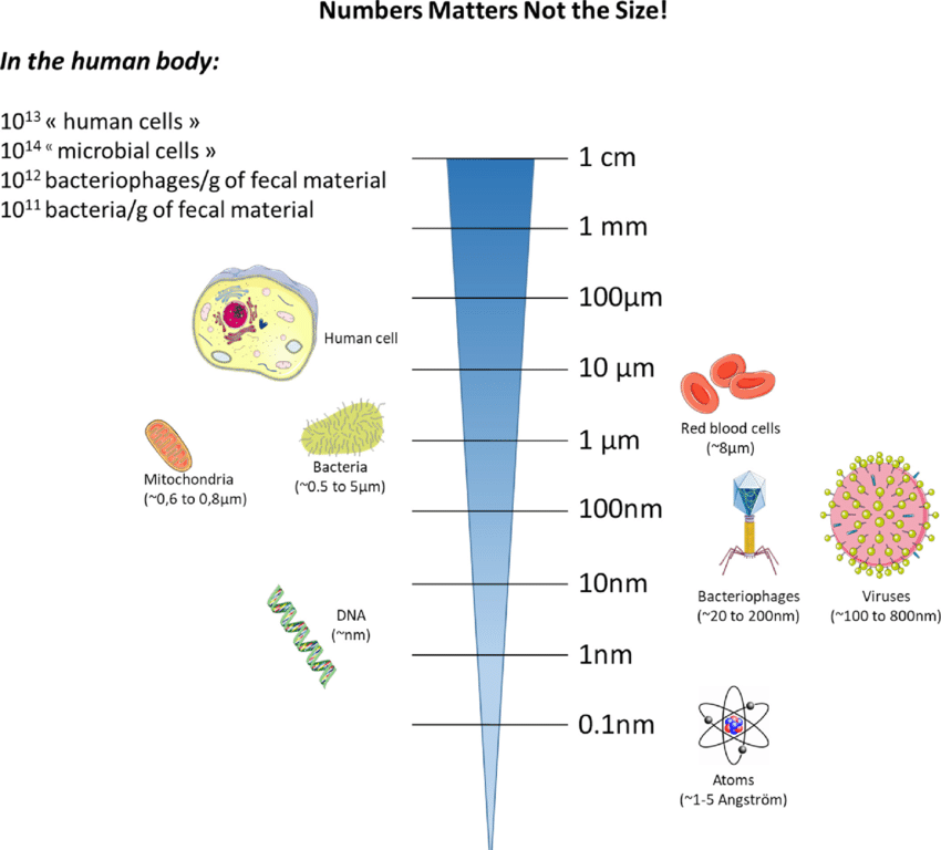 Micro-organismen domineren ons leven