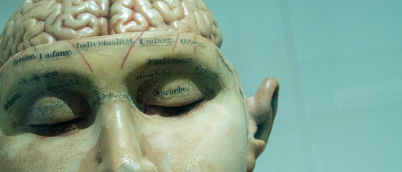 Hoger IQ door meer brandstof naar je brein | 3 belangrijke methoden