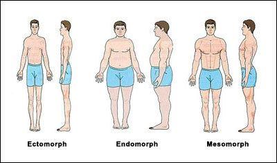 ectomorf mesomorf en endomorf somatypen