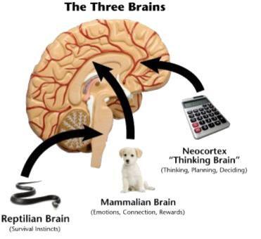 3 breinen