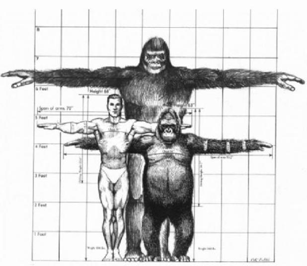 Chimpansee, mens en gorilla