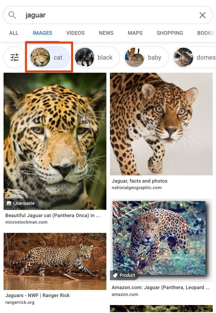 Google images jaguar cat