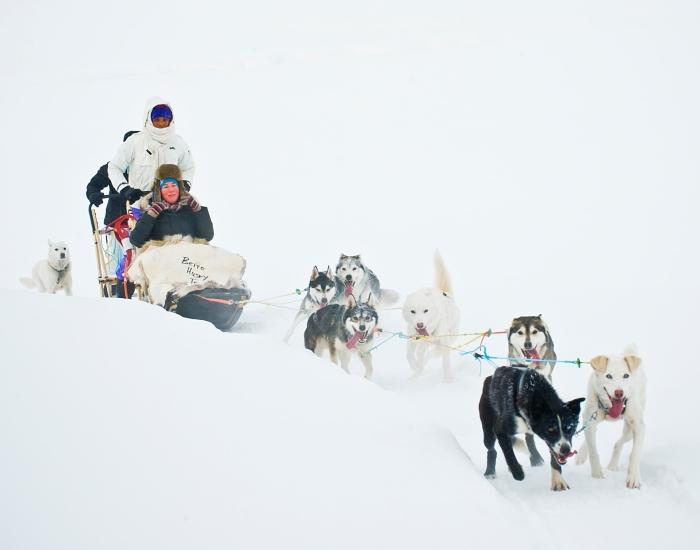Sledehonden, Herangtunet Noorwegen
