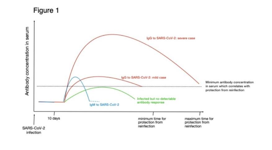 antistoffen_sars-cov-2_bloedwaardentest