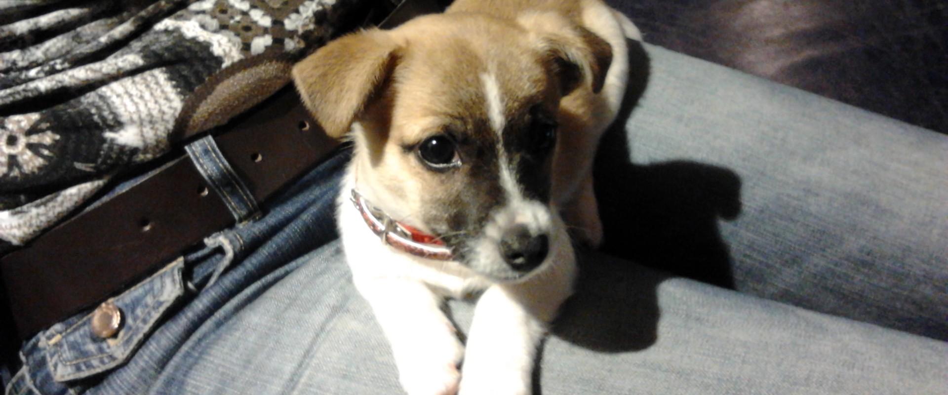 4 Socialisatie tips voor pupbaasjes in Corona tijd