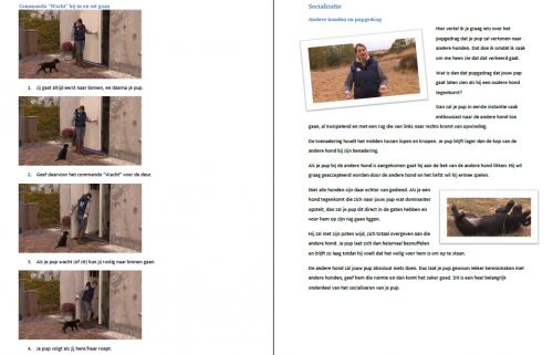 Puppycursus e-book Dé Complete Puppycursus hondentrainer puppycoach Lisette van Eechoud