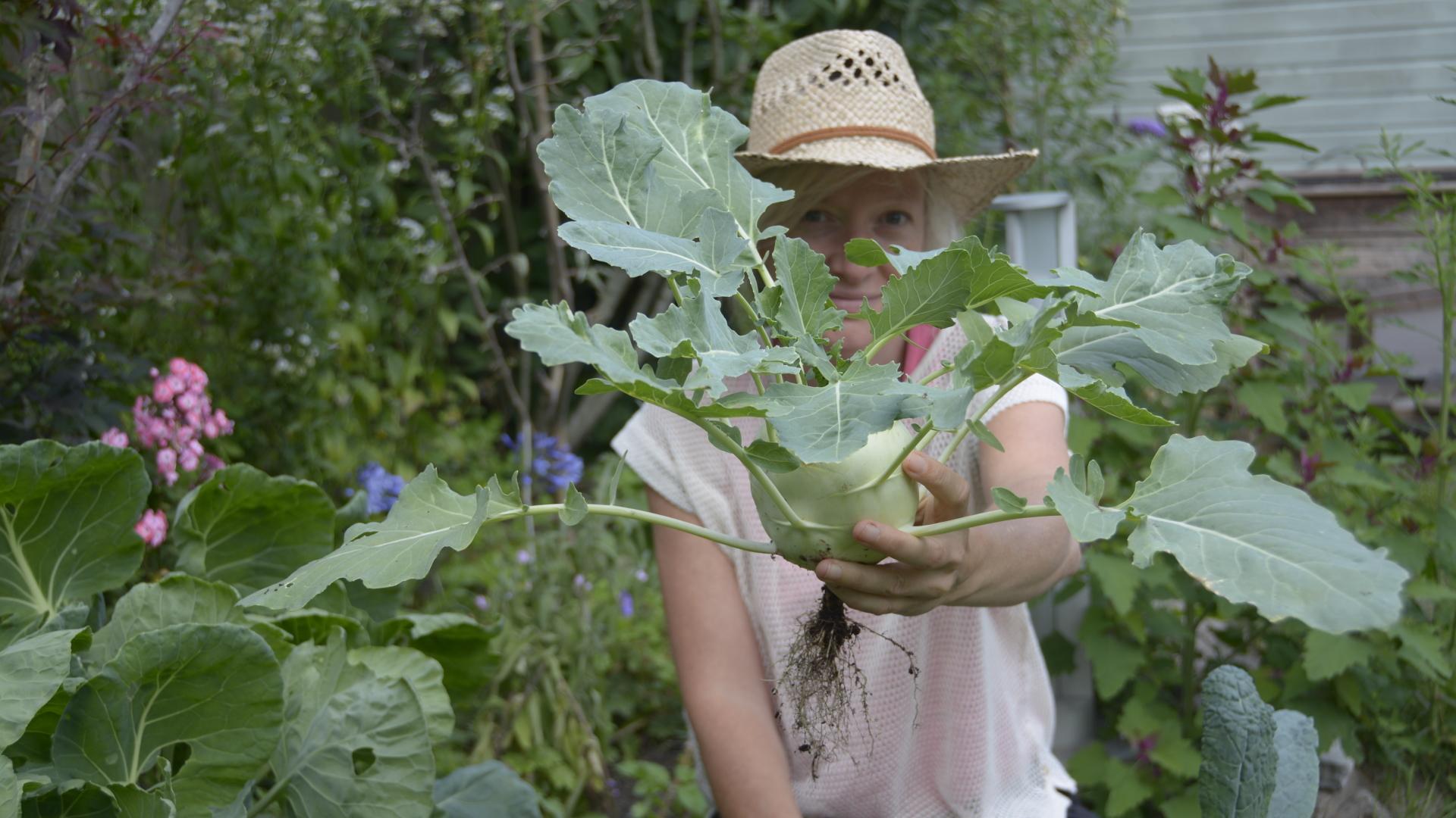 Jessica Koomen - Groen Moestuingeluk