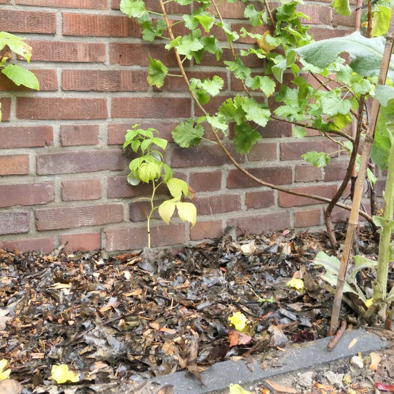 mulchen in de herfst