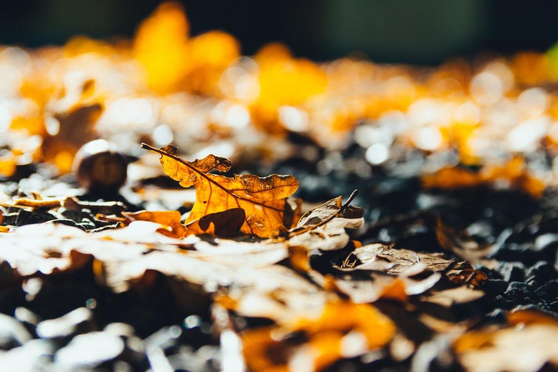 maak je eigen compost van bladeren