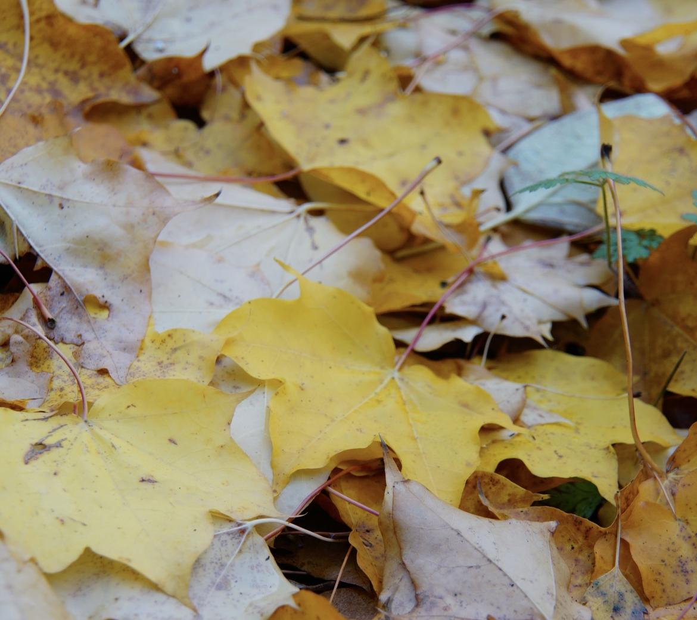Bladeren niet vegen maar bedekken