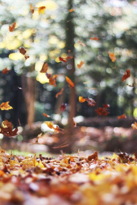 bladeren vegen of geen bladeren vegen?
